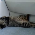 初チャレンジ!のネコのお風呂が簡単に出来るコツと方法とは?