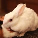 初めての人でも大丈夫!ウサギの飼育の方法と選び方まとめ!