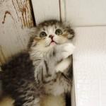 猫の待ち受けで恋愛運アップ!?画像・動画でストレス解消!?猫のもつすごい効果まとめ!