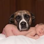 【アレルギーの心配は?】着ぐるみやおもちゃが大好きな赤ちゃんと犬との同居について